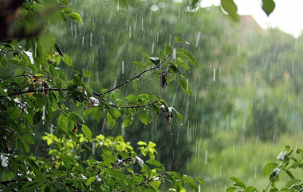 Фото во время дождя