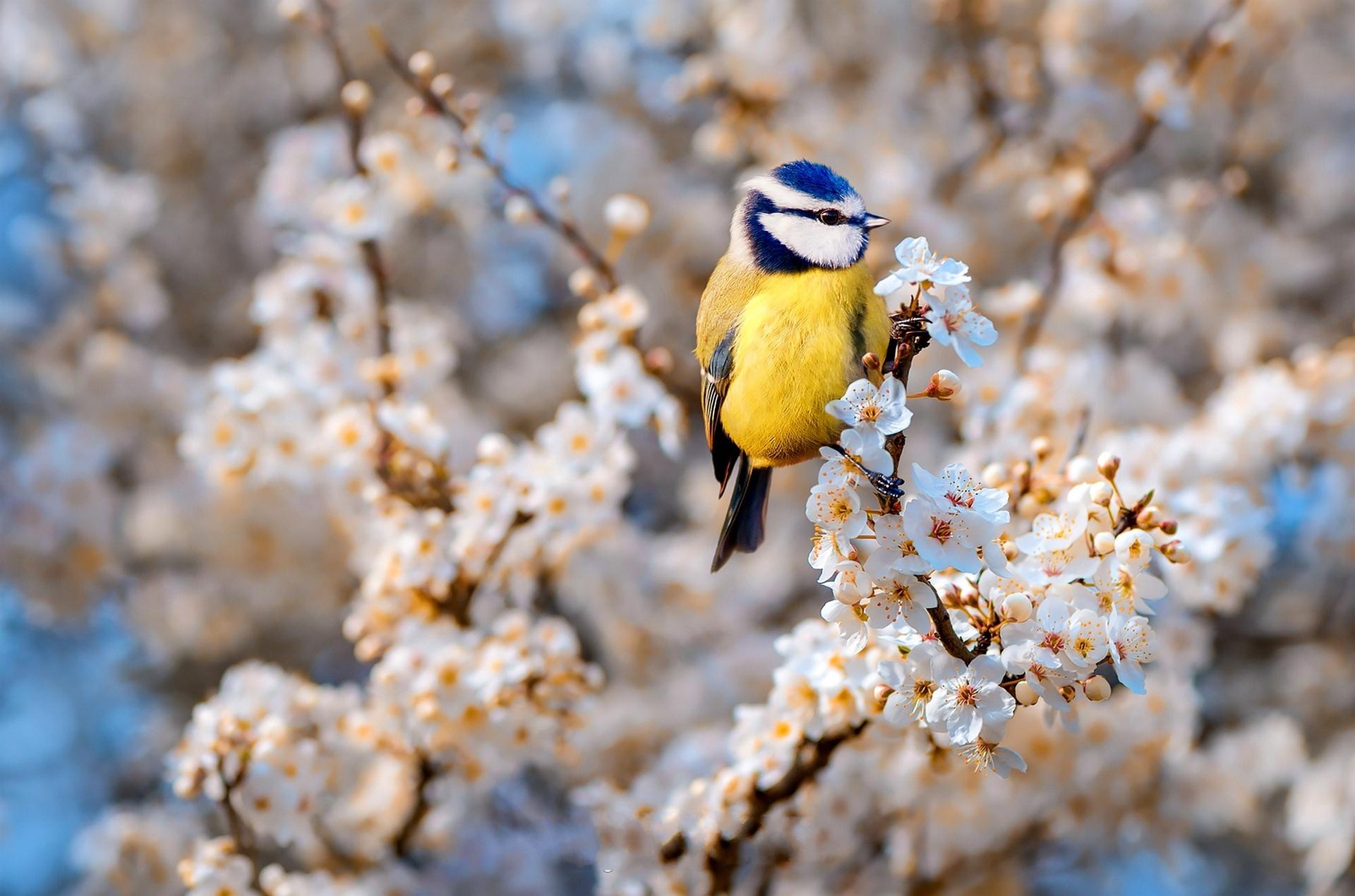 Картинка с птицами весной