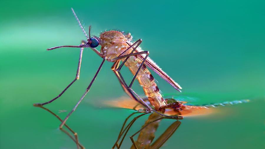 комары в природе картинки согласятся, что